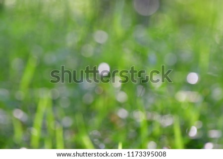 Out of focus in green nature background,when you see the green field nature in the sunny day.natural texture free space for the natural.blurred screen background.