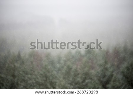 out of focus view of misty forest. far horizon #268720298