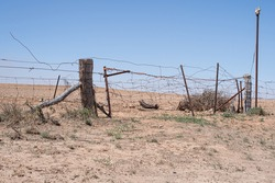 Outback Gate and vintage telegraph pole, improvised wire and picket gate, paddock entry. Hot dry summer, farming land in Outback South Australia.