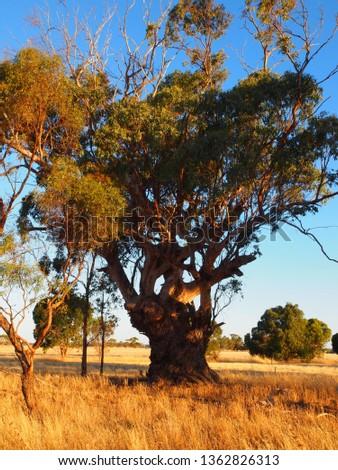outback visit australia #1362826313
