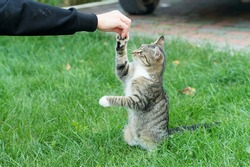 outbred cat pet sit on green grass domestic animal play with human hand giving it a happy life, animal shelter.