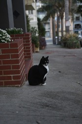 outdoor cat sitting on sidewalk next to brick wall
