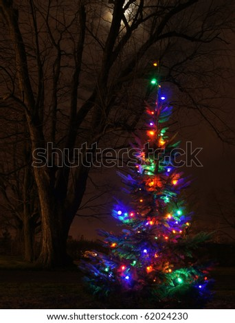 Outdoor Christmas tree with a full moon in background contrasts with bare deciduous tree
