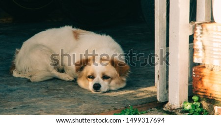 Outdoor closeup picture of a small Border Collie puppy laying on the ground, in the shadow, on a hot, sunny afternoon