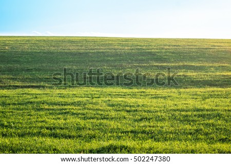 Outdoor countryside meadow grass nature. Rural grass field landscape. Background photography of grass field, natural landscape. Green grass field. Lush grass field. Agricultural grass field pastures