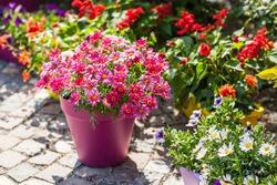 Outdoor flower pots for small garden, patio or terrace