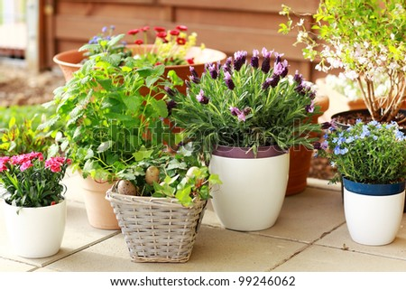 Outdoor Flower Plants Outdoor Flower Pots For Small