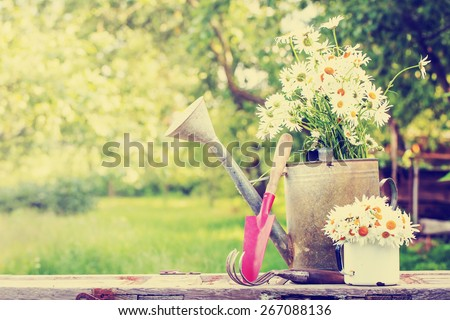 Outdoor gardening tools and daisy flowers/ Spring Gardening tools on beautiful garden background