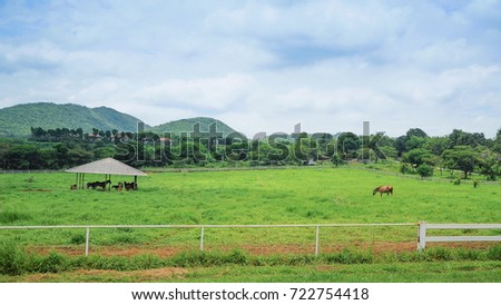 outdoor horse stall on the nature field #722754418