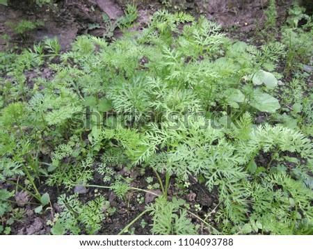 outdoor images of garden #1104093788