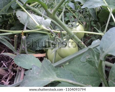outdoor images of garden #1104093794