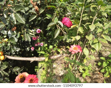 outdoor images of garden #1104093797