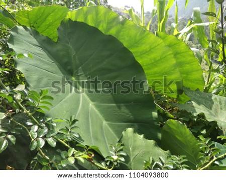 outdoor images of garden #1104093800
