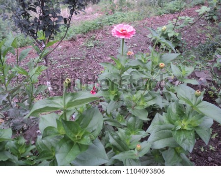 outdoor images of garden #1104093806