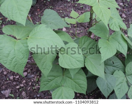 outdoor images of garden #1104093812