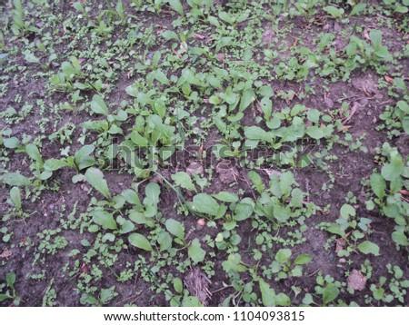 outdoor images of garden #1104093815