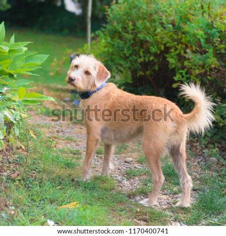 Outdoor little cross breed dog standing in the garden