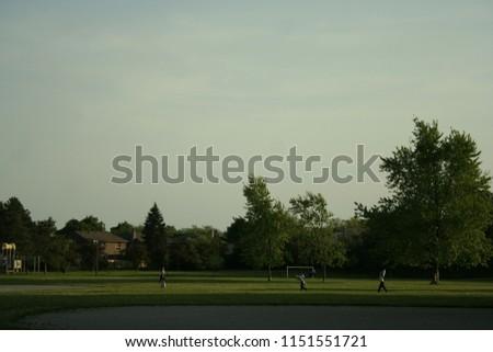 Outdoor park, Trees field  #1151551721