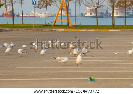 Outdoor parking. Lines in the parking lot. Flock of seagulls looking for food in the parking lot. Stok fotoğraf ©