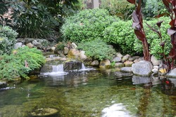Outdoor Pond in Garden with Small Waterfall