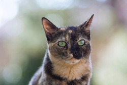 Outdoor portrait of a brown cat with green eyes.