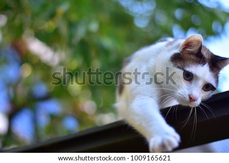 Outdoor portrait of a white and brown cat with big blue eyes,  Playing cat with blurred natural background.