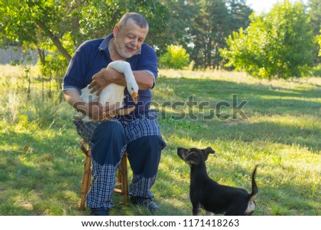 Outdoor portrait of senior man introducing black puppy to his cute friend  white goose
