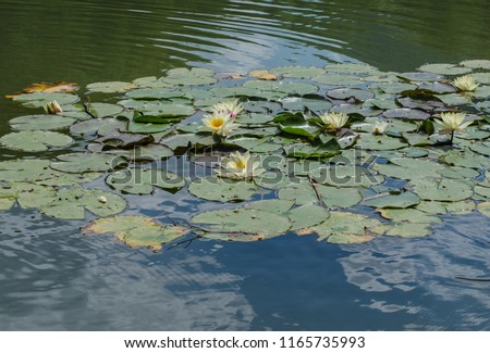 Outdoor recreation - lilies on the lake #1165735993