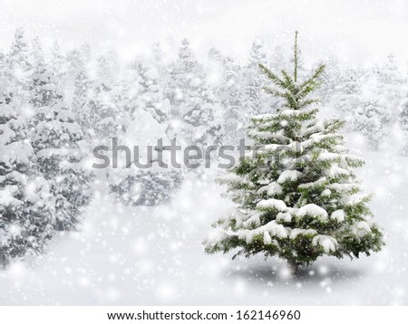Outdoor shot of a nice little fir tree in thick snow for the perfect Christmas mood