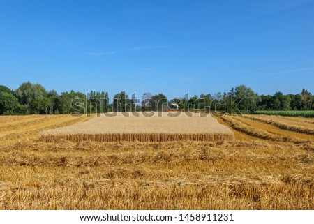 Outdoor sunny view of working combine harvester tractor harvest on golden oat or wheat field during harvesting summer season against deep blue sky in Meerbusch, countryside of Düsseldorf, Germany.