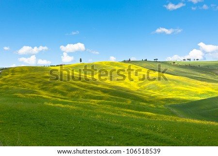 Outdoor Tuscan Valley d'Orcia green and yellow fields view with blue sky