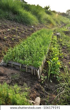 Outdoor Vegetable Farm Field Thailand