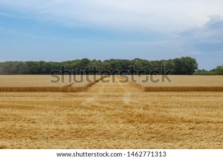 Outdoor view of partly cut grain harvested field during harvesting summer season against blue cloudy and overcast sky in Meerbusch, countryside of Düsseldorf, Germany.
