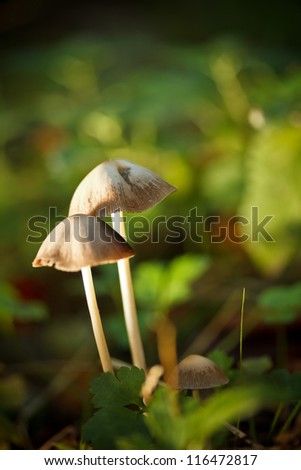 Outdoors shot of autumn forest mushrooms