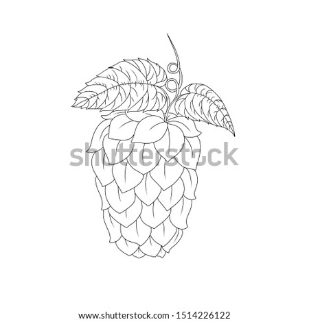 Outline beer hop herb plant for brewery. Line art hand drawn illustration with single object Isolated on white background. Oktoberfest theme decoration.