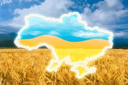 Outline of Ukraine with national flag and wheat field on background