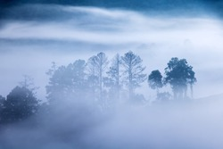 Outlines of trees in the fog creeping. Silhouette of trees in fog in forest. Morning fog in the valleys of the mountains.
