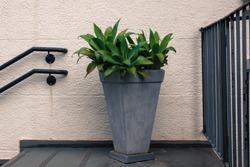 outside concrete vase