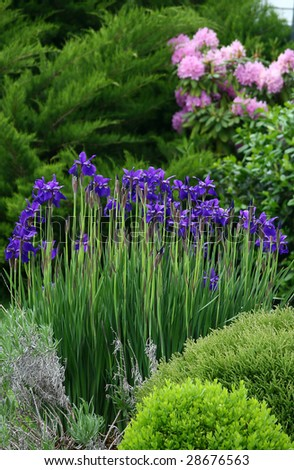 Outside shot of flowers and plants with focus on BlackBeard Iris'.