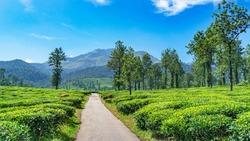 Outstanding Landscape view from Wayanad Tea Plantation at Meppadi Kerala