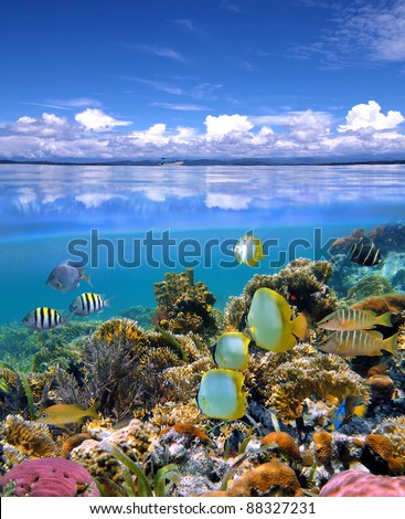 Over and under sea with cloudy blue sky reflected on water surface, underwater part with a colorful coral reef and tropical fish