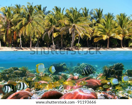 Over and under water surface near a beach with coconut trees and a coral reef with tropical fish