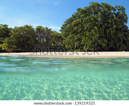 Over-under view of a tropical beach with lush tropical tree and sunlight on sandy seabed below water surface, Caribbean