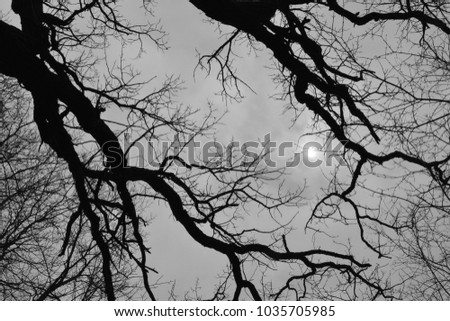 Overcast sky through dark silhouette leafless tree trunks and branches reach to the partially visible sun.