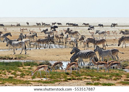 Overfilled waterhole in the Etosha National Park