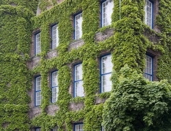 overgrown house facade in Düsseldorf