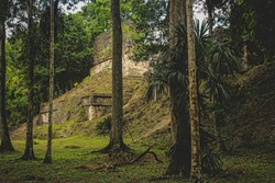Overgrown Temples in Lost Mayan City in Dense Jungle Rain Forest. Ancient Stone Ruins surrounded by Trees (Tikal, Guatemala).