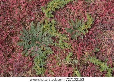 Overgrowth of green and red weeds in autumn in gravel that needs serous weed control #727132153