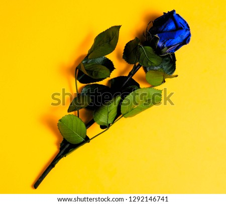 Overhead picture of blue rose on yellow background, including stem and leaves