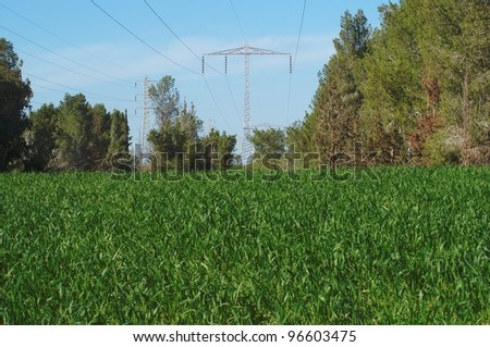 Overhead power transmission line over the pine forest and meadow